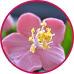 Пыльца для изготовления цветов купить