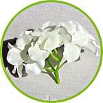 Цветок для топиариев своими руками - гортензия