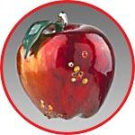 Яблоко прозрачное, роспись