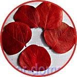 Природные материалы для флористики и топиариев