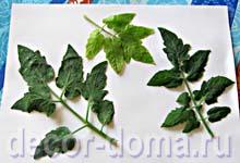 Готовим листья для декора