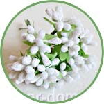 Нежные белые цветочки