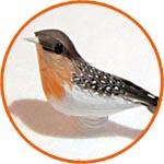 Птичка мини с красной грудкой