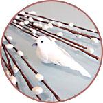 Веточки вербы с белой птичкой