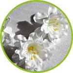 Цветочки для декора и флористики, жасмин