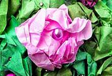Цветок из папиросной бумаги